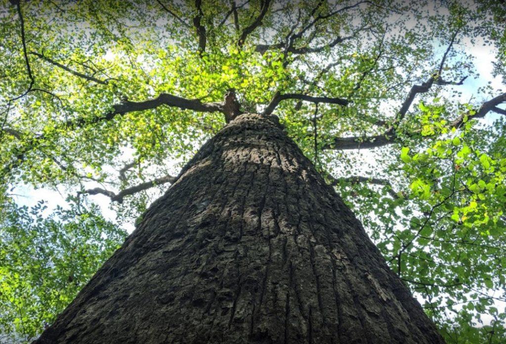 joyce kilmer national forest.jpg